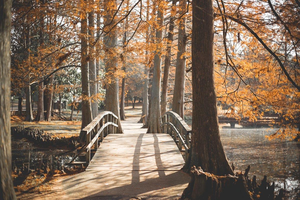 Petit pont en bois sur une rivière en automne
