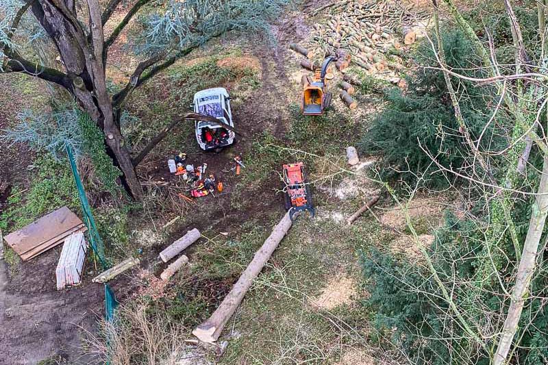 Démontage d'un arbre à Tilff