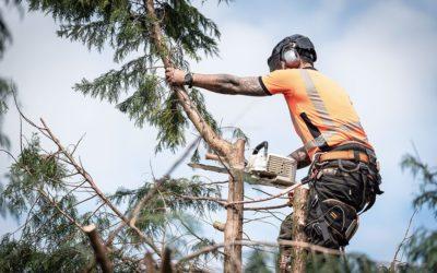 Émondage et élagage d'arbre