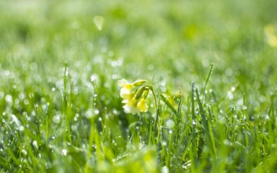 Boostez vos pelouses pour l'été
